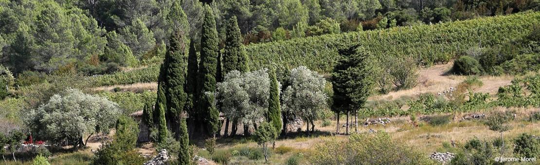 Bergerie et vignes  - Domaine Clos de l'Anhel